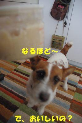 おいしいの?2.jpg