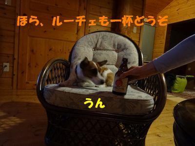 お酒とルーチェ.jpg