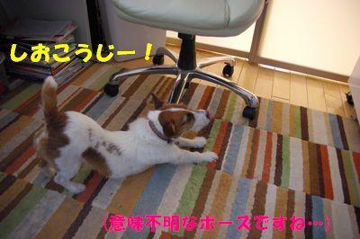しおこうじー!.JPG