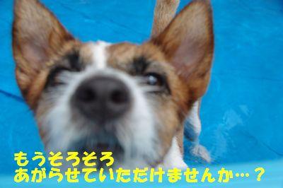 ぷーる13.jpg