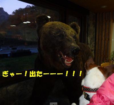 クマと遭遇.jpg