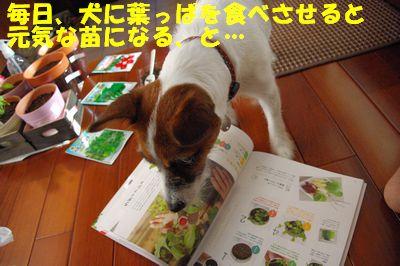 野菜97.jpg