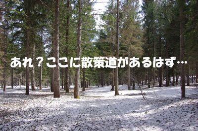 2散策道.jpg