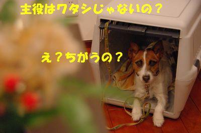 ちがうの>.jpg