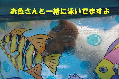 ぷーる6.jpg