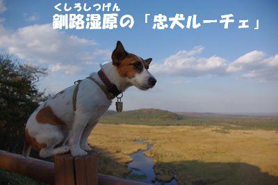 忠犬.jpg